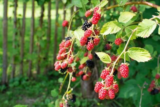 Фруктовый сад: проверка и подготовка