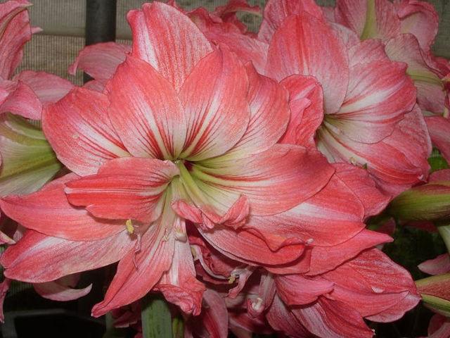 Ядовитые цветы - комнатные монстры в вазонах