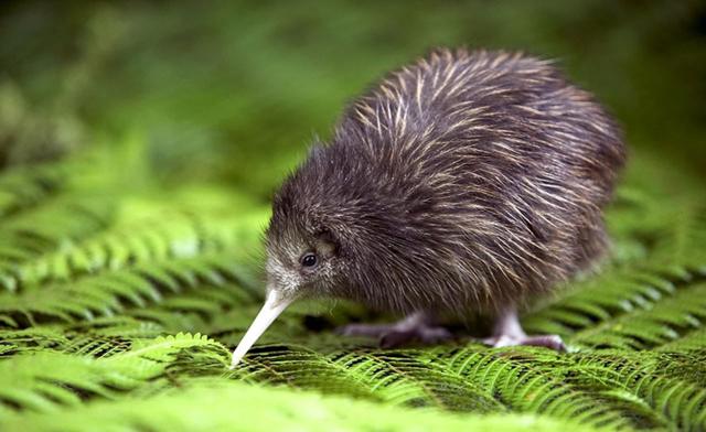 Интересные факты о Новой Зеландии