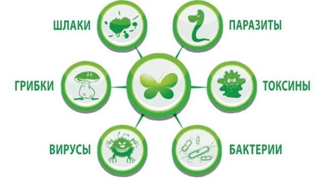 Очищение организма от шлаков и токсинов