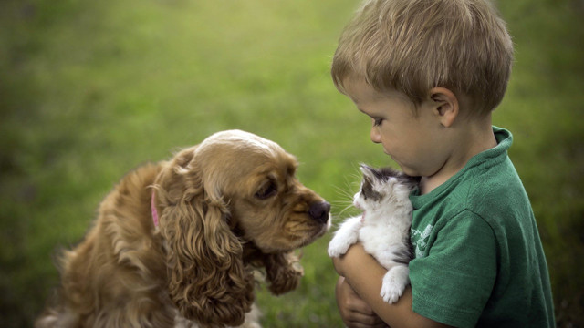 Собака для ребенка: как выбрать доброго и любящего питомца