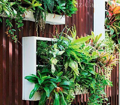 Вертикальное озеленение своими руками